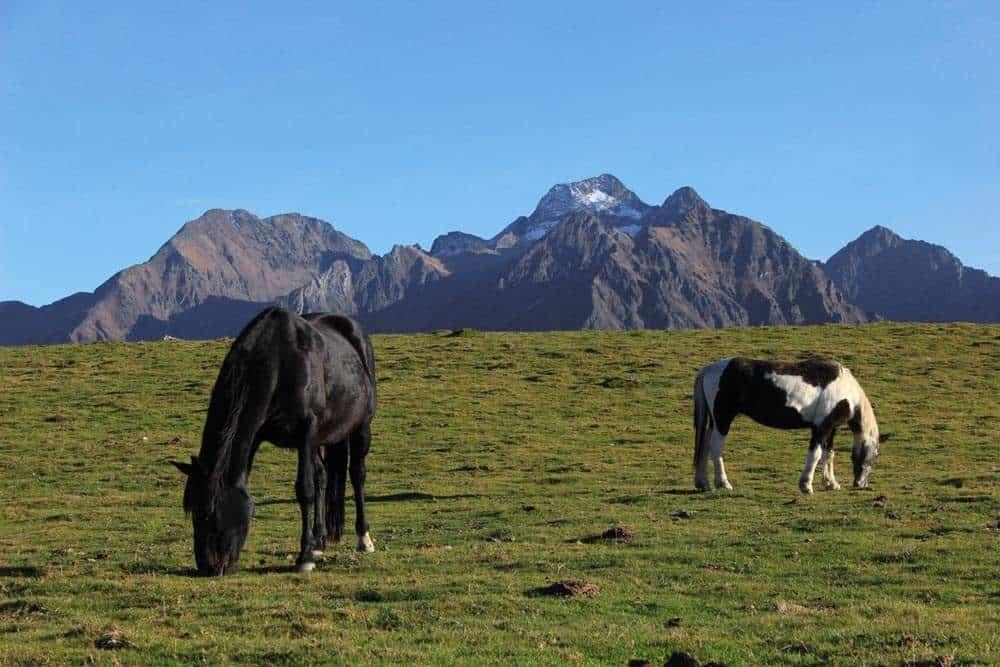 Deux chevaux en montagne