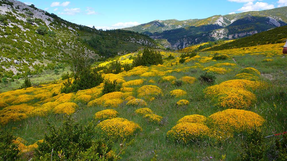 Le printemps en vallée d'Aure