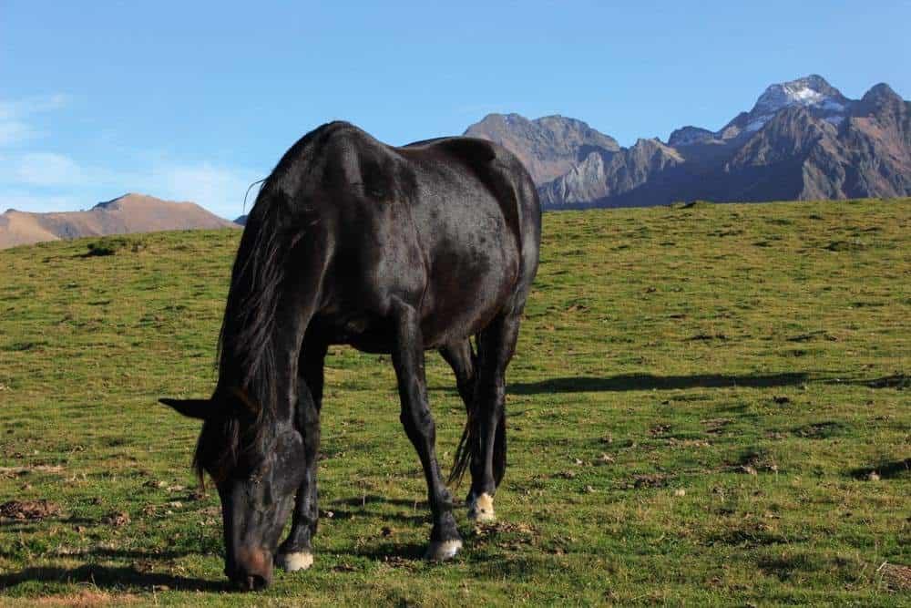 un cheval noir en montagne